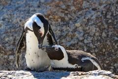 Пингвины-2