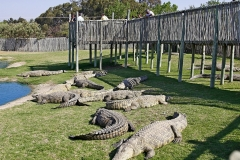 Ферма крокодилов